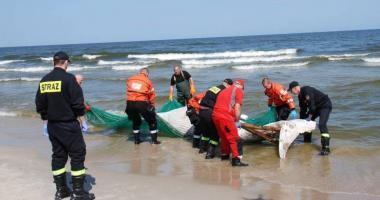 Martwy wieloryb na plaży koło  Krynicy Morskiej